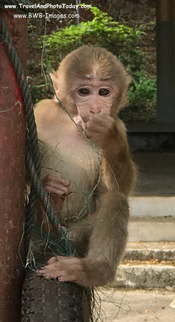 CR monkey 2