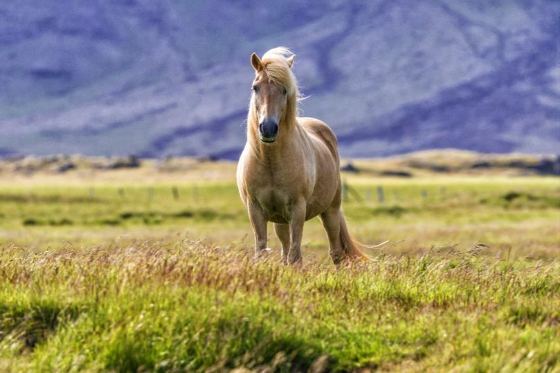 Iceland p7