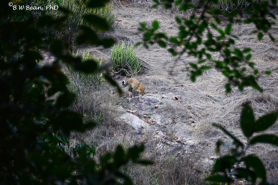 R leopard 2