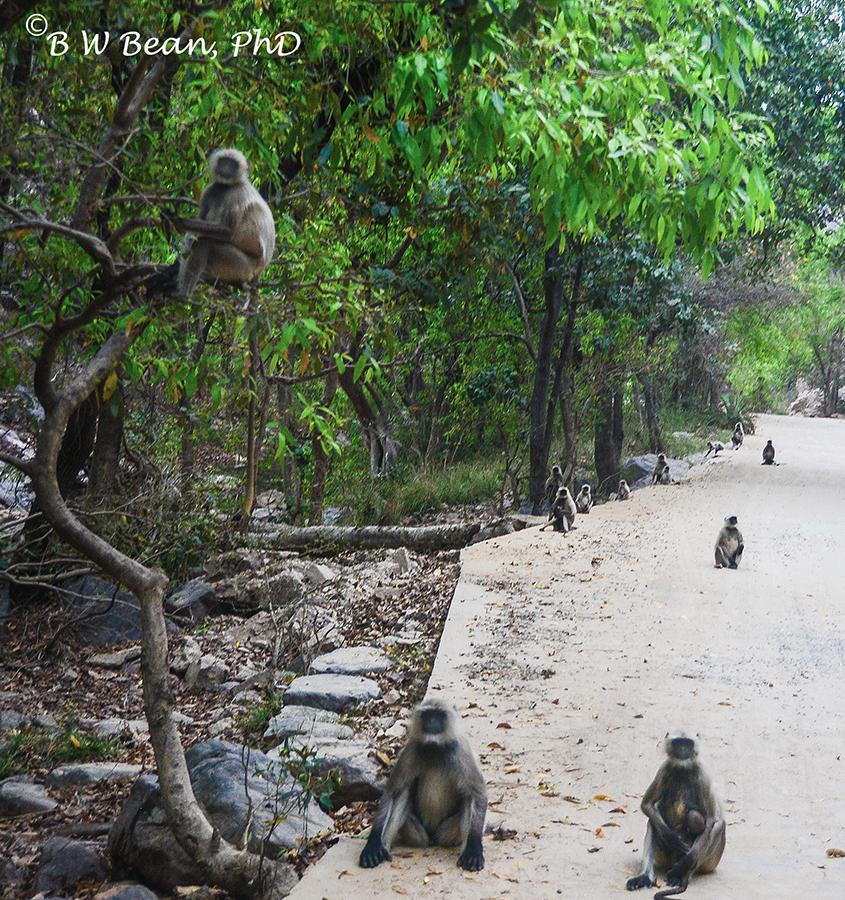 R monkeys