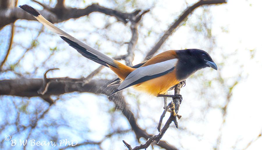 R park bird