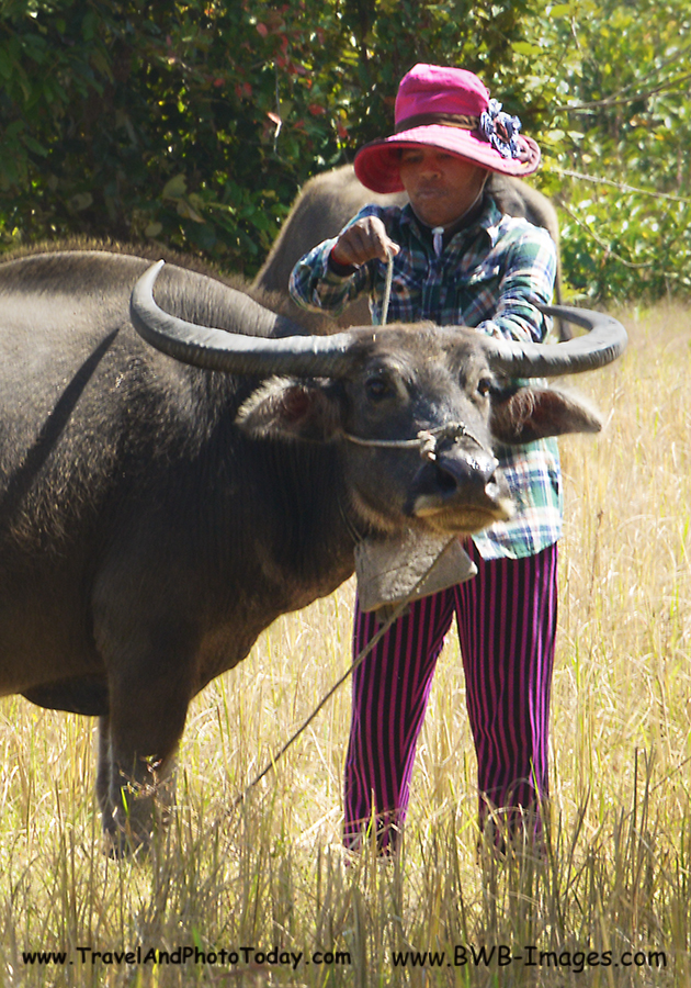 Siem Reap Day Trip Waterbuffalo