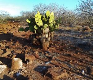 g cactus s