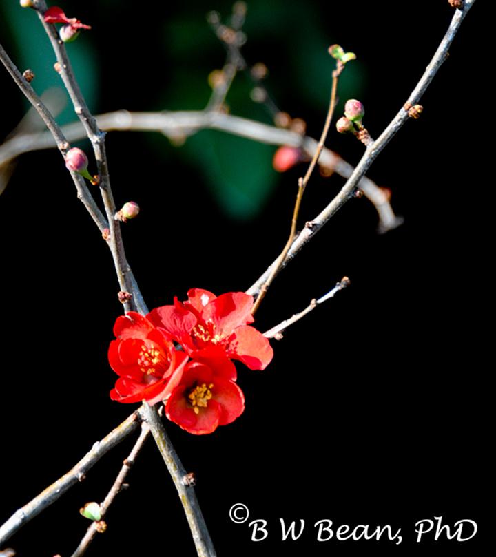 kyoto flower1